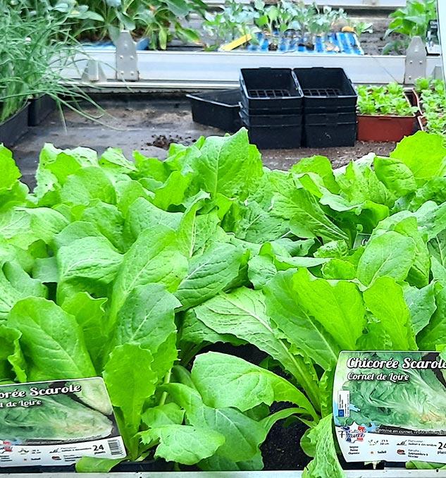 Jardinerie près de Cholet