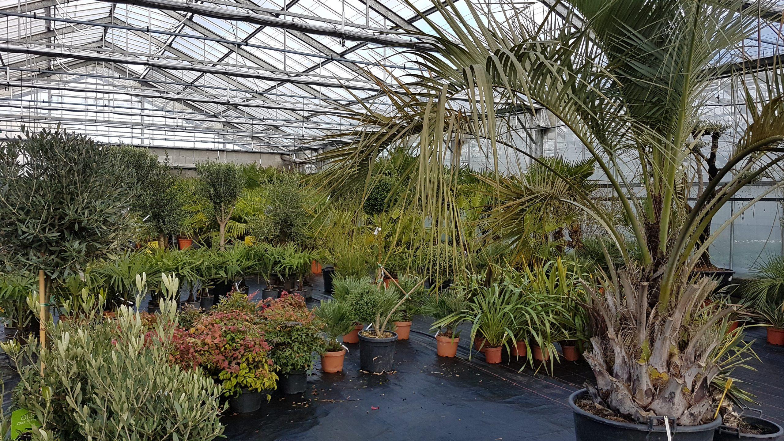 Jardinerie producteur et vendeur de plantes Nantes